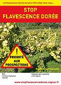 flavescence_doree.jpg